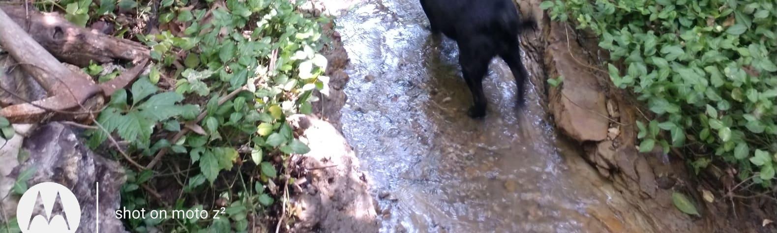 Sandstone Spring & Creek