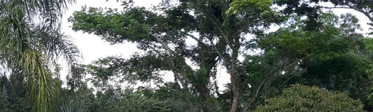 Punta Gorda Botanical Retreat