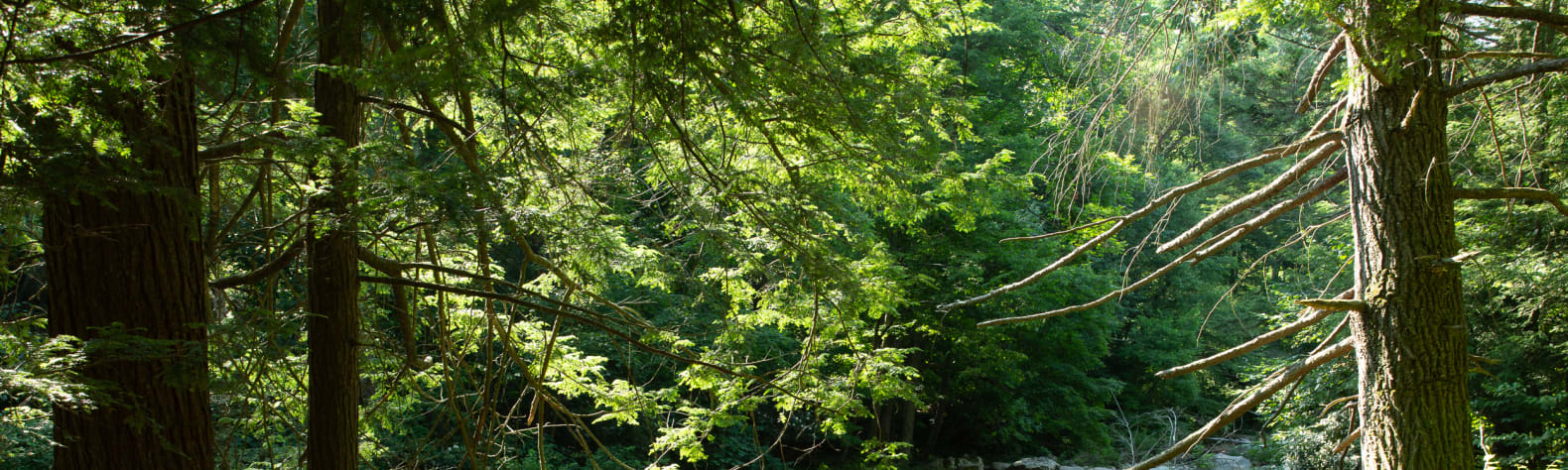 Abrams Creek Campground/Retreat