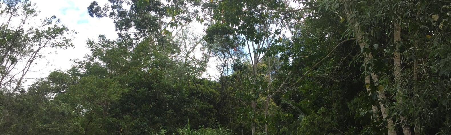 Birds Nest, Yandina Creek