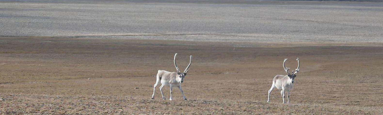 Qausuittuq National Park