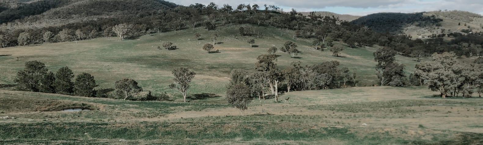 Kate W.'s Land