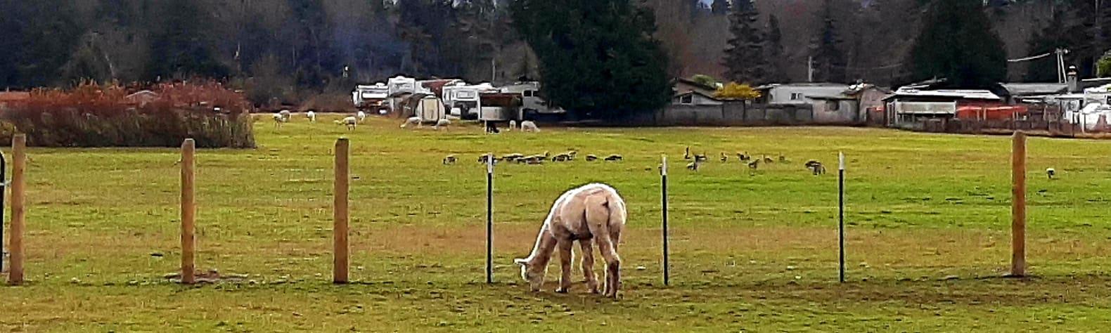 Run with the Alpacas Camp