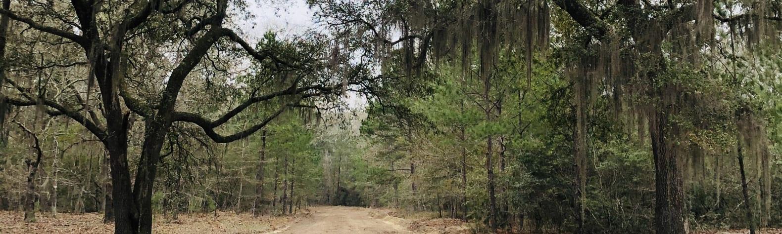 Triple Oaks Trail