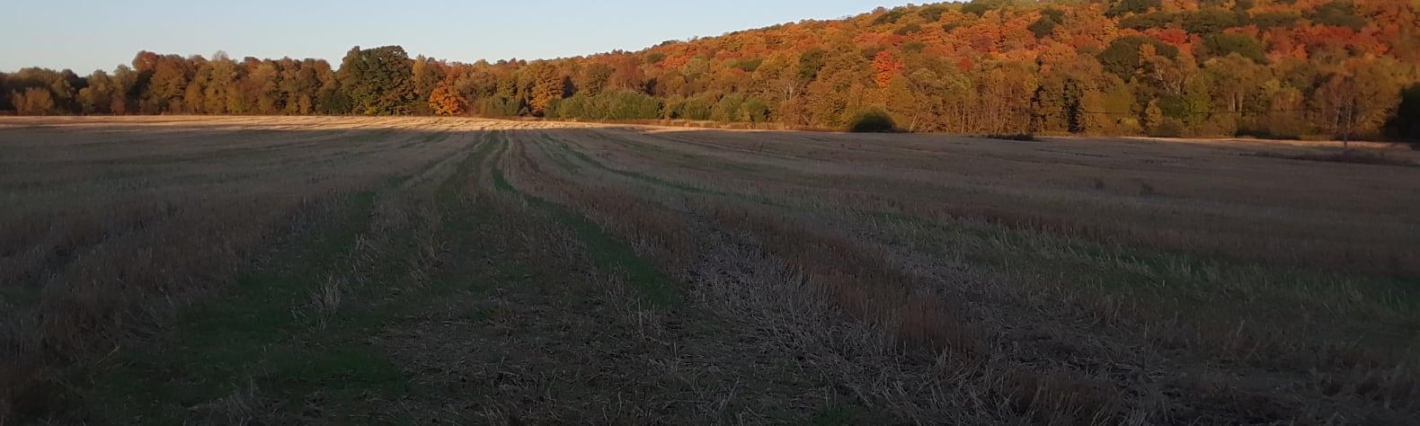 Wolfgang C.'s Land