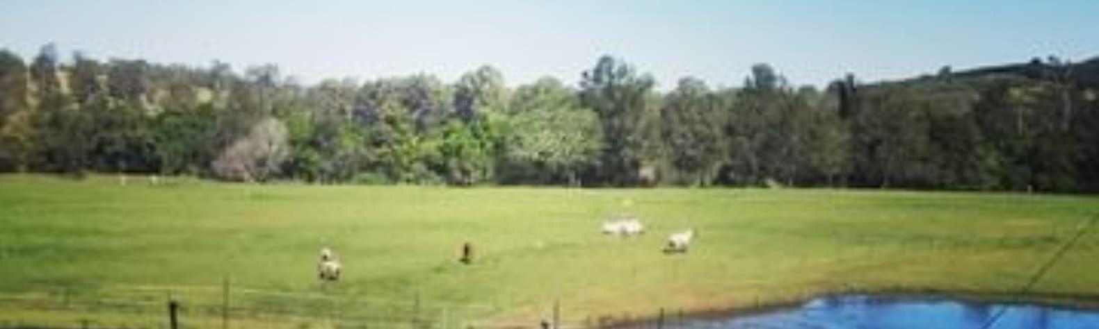 Melinda E.'s Land