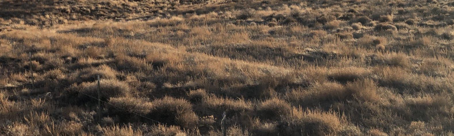 The Bullock Ranch