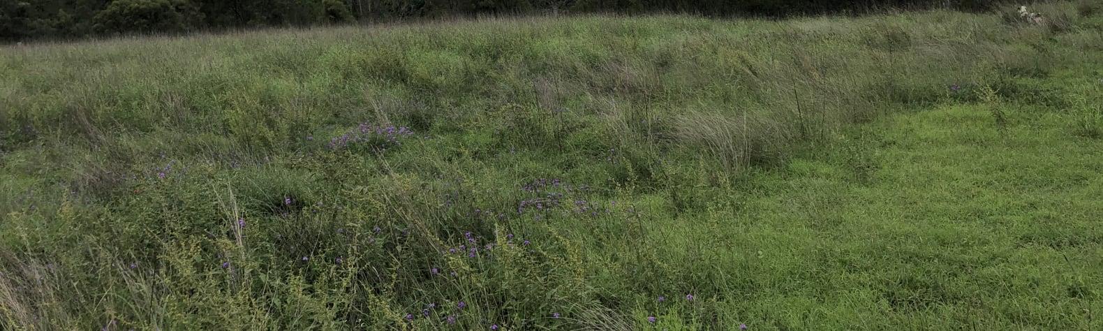 Cindy P.'s Land