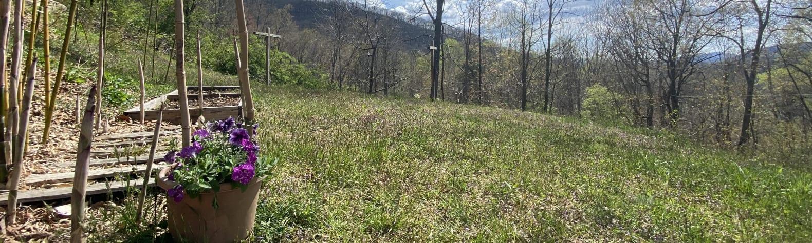 Totoro's Hilltop Hideaway
