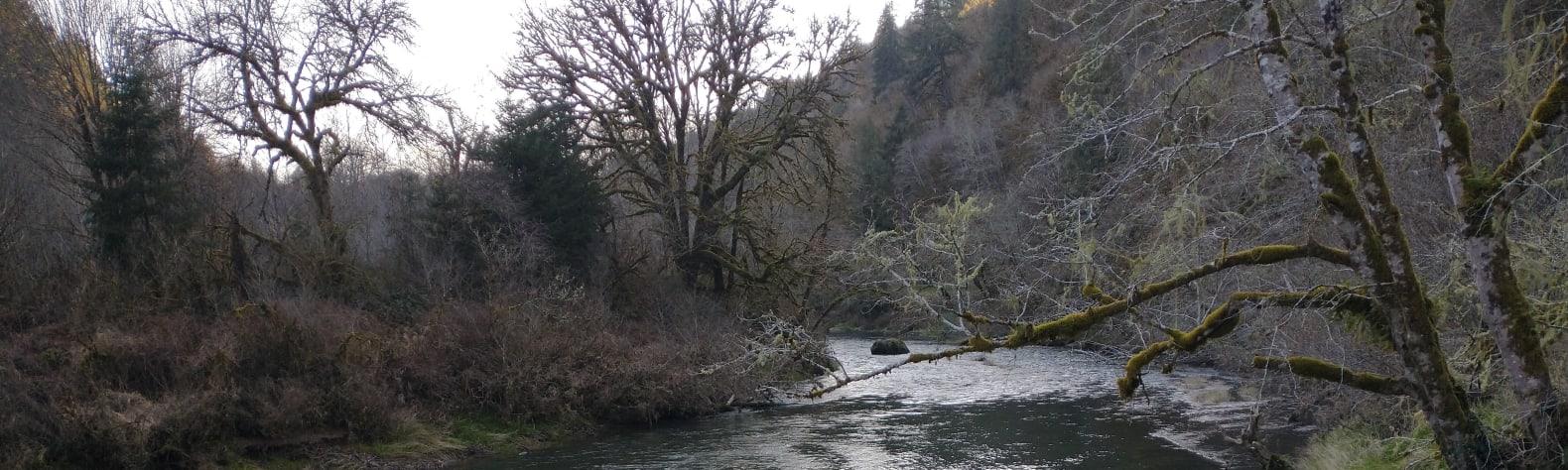 Alsea river seclusion