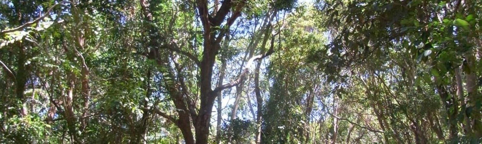 Broken Head Nature Reserve