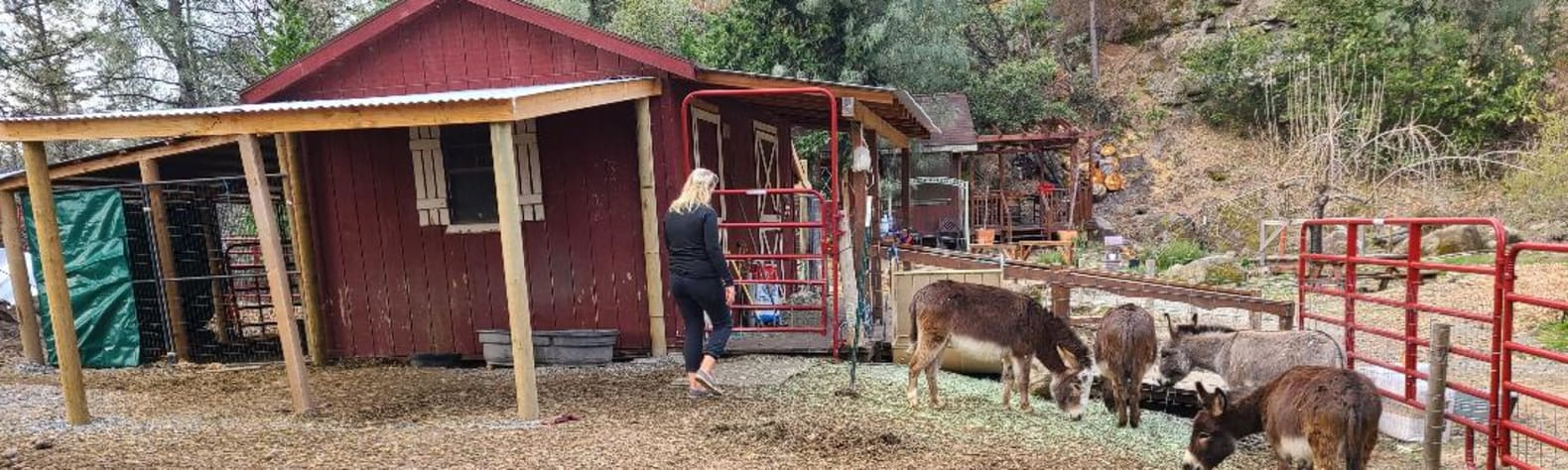Murphys Mini Farm Stay