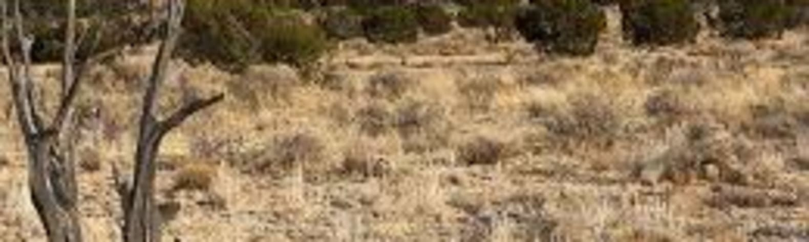 South Rim Ranch Grand Canyon Williams, AZ