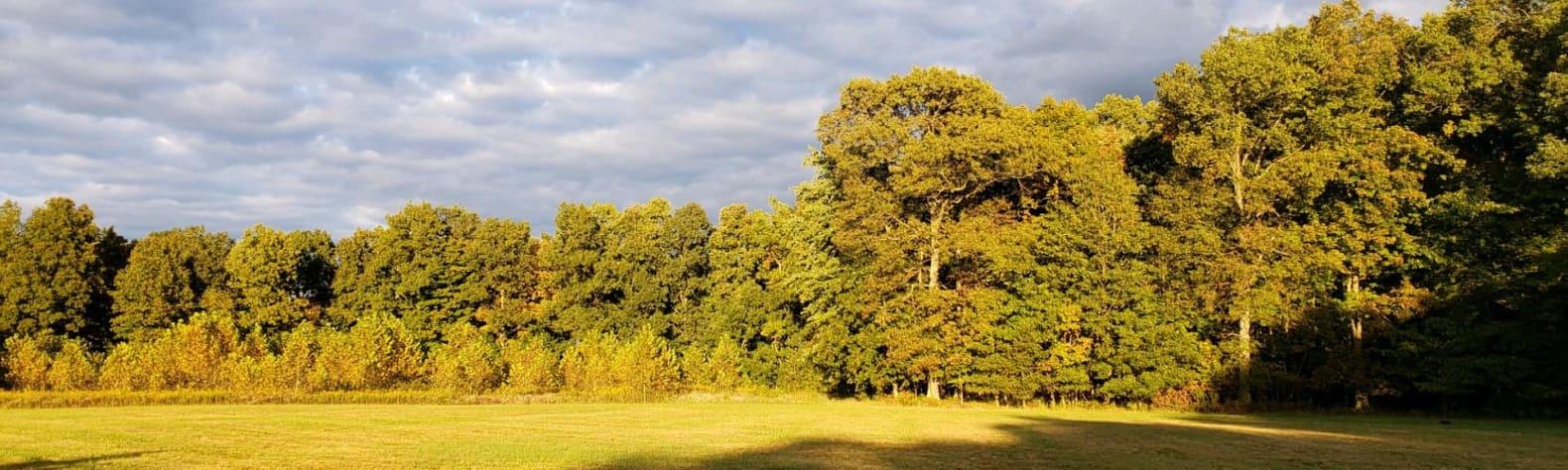 Ivey W.'s Land