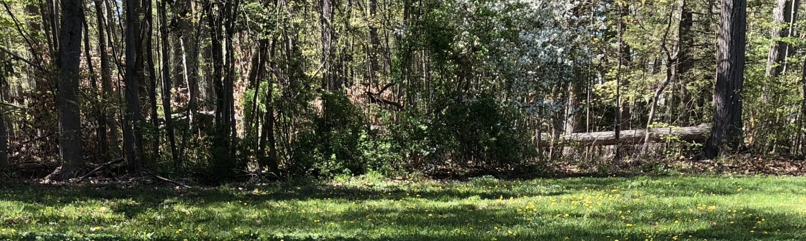 Woodland Site