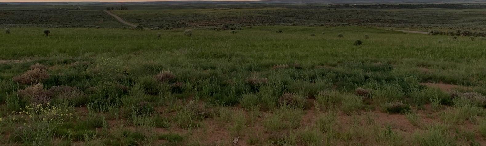 Canyon Country Solitude
