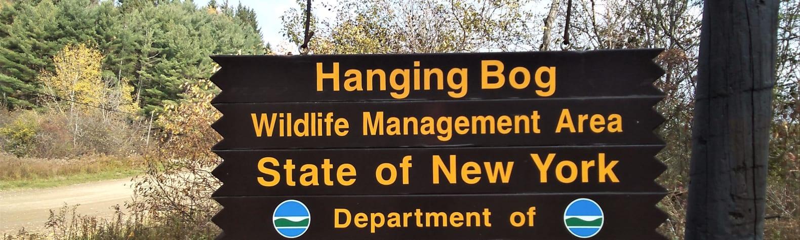 Hanging Bog Big Bass Serenity