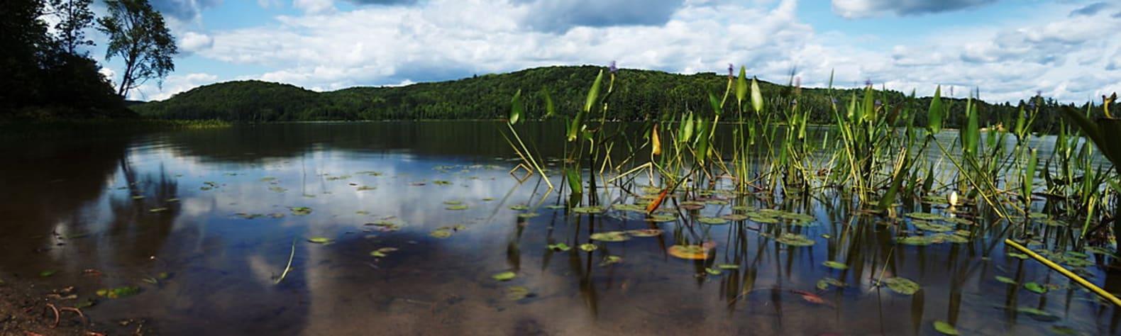 Arrow Lakes Provincial Park