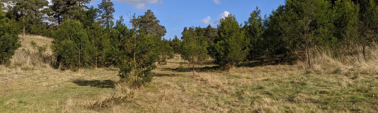 Pinebank Farm