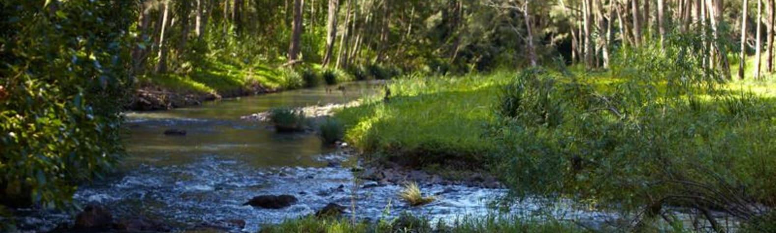 Tallebudgera Valley Sanctuary