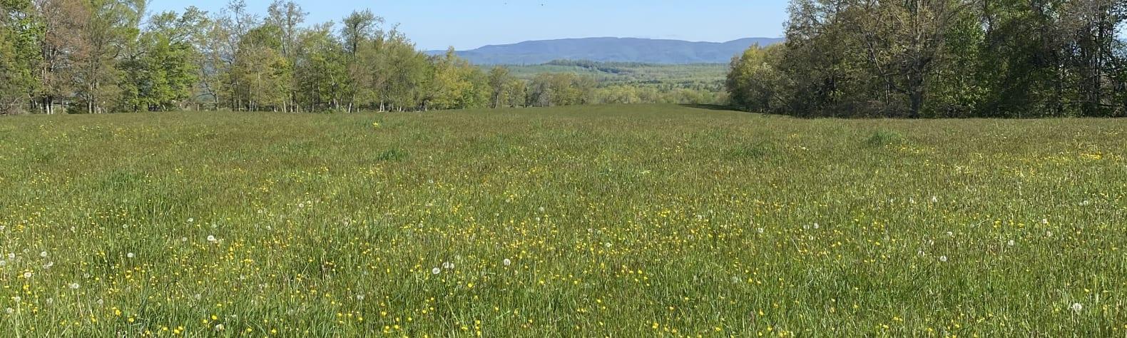April P.'s Land