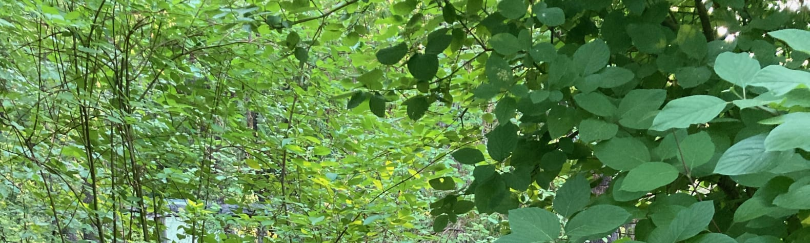 Shade of the Madrone Grove