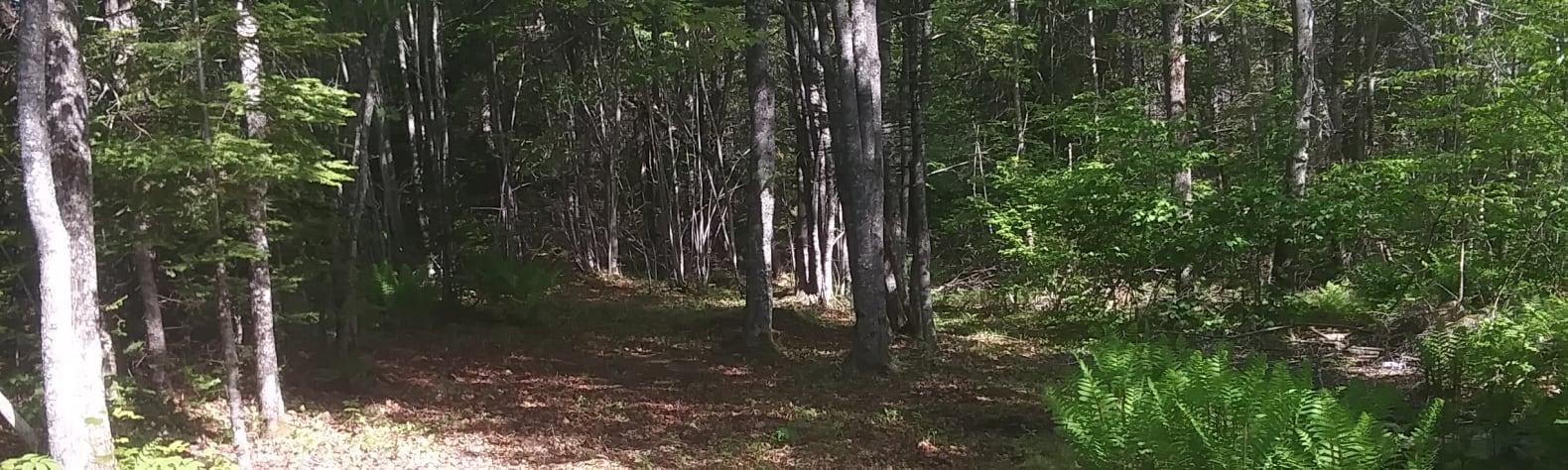 Peninsula Links Campsite