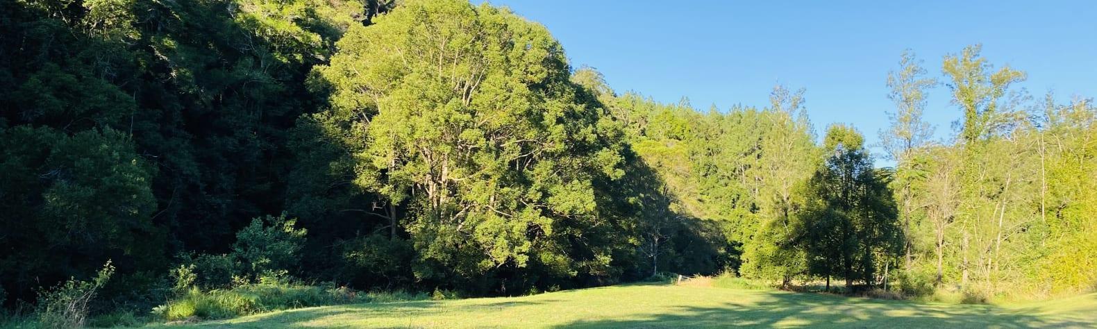Rowlands Creek Camp Area