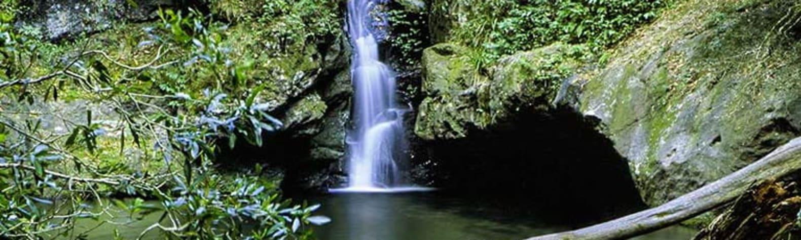 Tapin Tops National Park