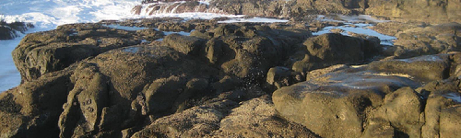 Cape Arago State Park