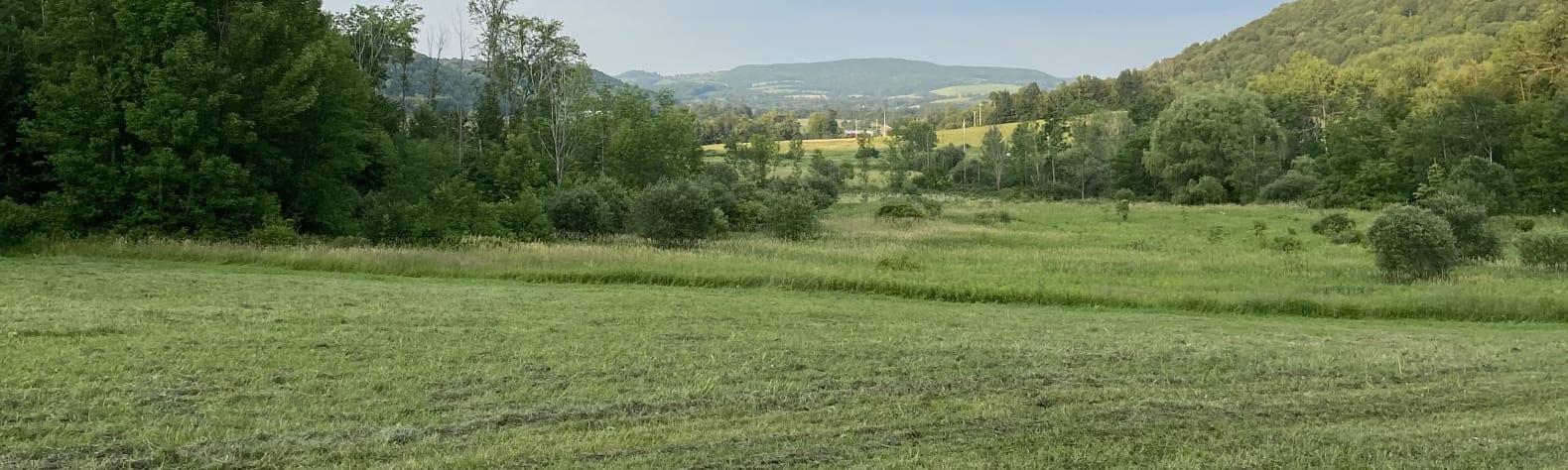 Gaukhar  T.'s Land