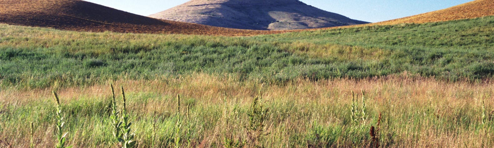 Steptoe Butte State Park Heritage Site