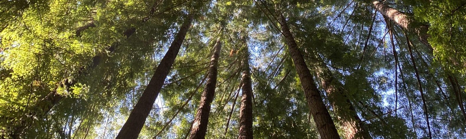 Redwood Basin Portal