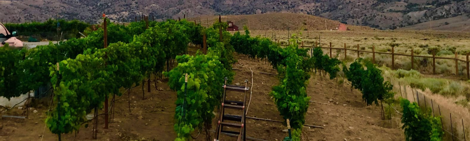 VintageTrailer Vineyard