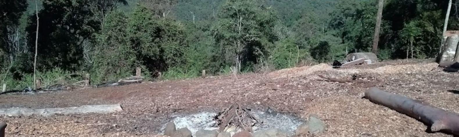 Murray Scrub Forest Views