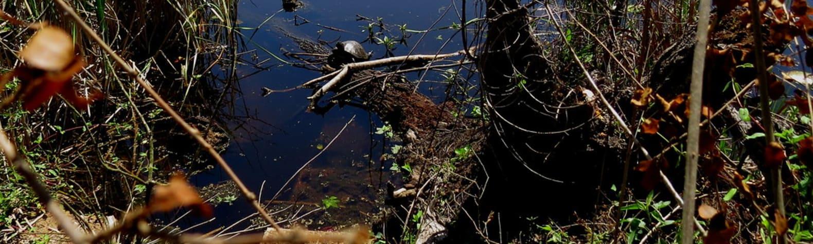 Sheldon Lake State Park