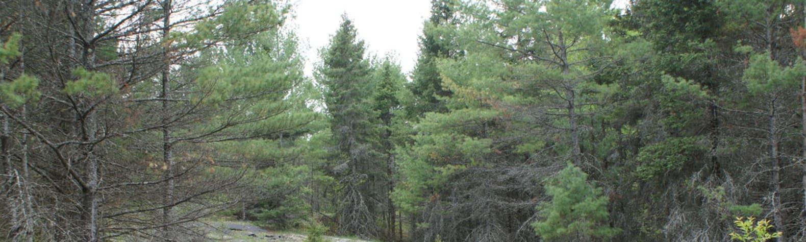 Petroglyphs Provincial Park