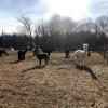 Red Hill Fiber Mill & Alpaca Farm