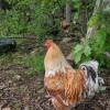 Ozark Family Camp and Farm