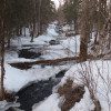 Wild Forest, Streams/Lakes Fishing