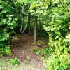 Forest Off-Grid Organic Farm