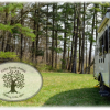 Pine forest or field camping