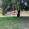 Maple Tree Camp