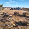 Mature desert with Joshua trees