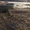 Swamp acres