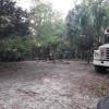 Overgrowth Jungle near Springs