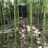 Cross Timbers Hillside