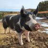 Farm Sanctuary in Cibola-No Hookups