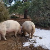 Farm Sanctuary-No Hookup,Small Site
