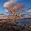 Soda lake desert oasis - boondock